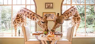 Image of Giraffe Manor