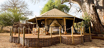 Image of Sanctuary Swala