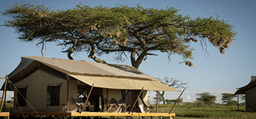 Image of Siringit Serengeti Camp